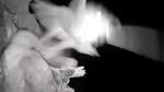 Đại bàng bị cú 'khổng lồ' đột kích, bắt sống trong đêm