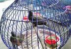 'Xin đểu' 2 con cu gáy bị khởi tố tội cưỡng đoạt tài sản