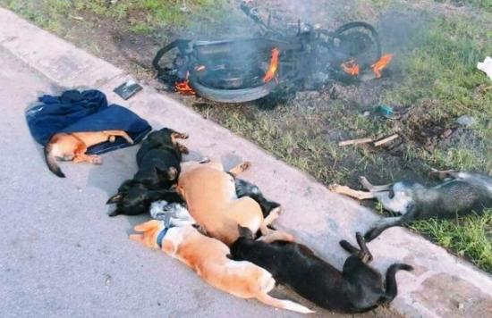 2 người trộm chó bị đánh bất tỉnh, đốt xe