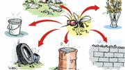 """""""Xóa sổ"""" ngay 6 thứ trong nhà mà muỗi và bọ gậy đang trú ẩn"""