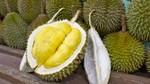 Tên tiếng Anh các loại hoa quả đặc sản của Việt Nam