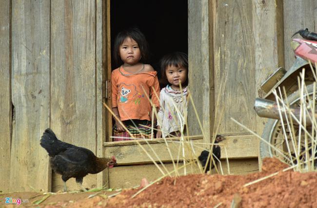 Gà xương đen quý hiếm của người Mông ở Mù Cang Chải