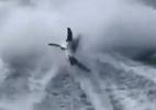Cá mập bị hành hạ dã man gây phẫn nộ