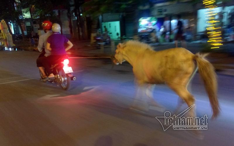 Ngựa bạch phi nước đại trên phố Hà Nội