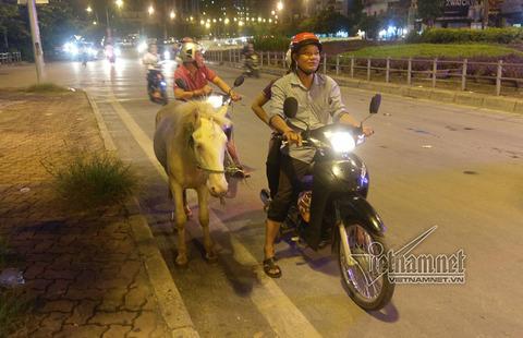 ngựa bạch trên đường