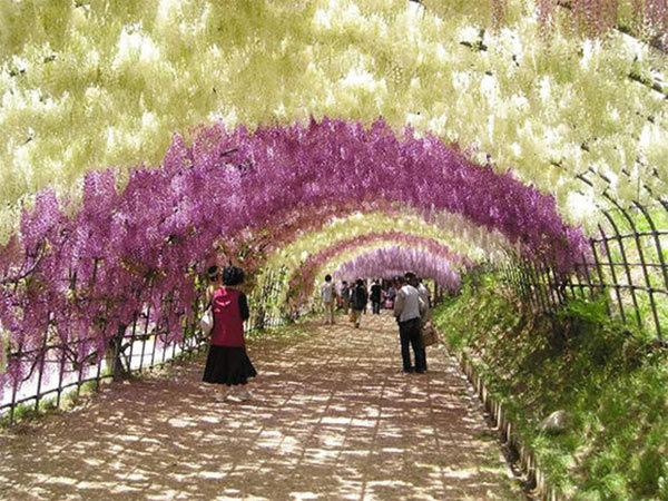 9 đường hầm hoa và cây đẹp như thiên đường