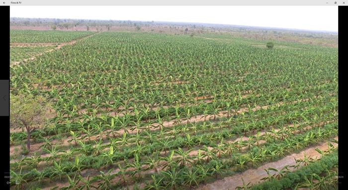 'Tường lửa' cản thương hiệu toàn cầu nông sản Việt
