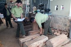 Phát hiện gỗ thông đỏ quý hiếm trong nhà Trưởng ban quản lý rừng