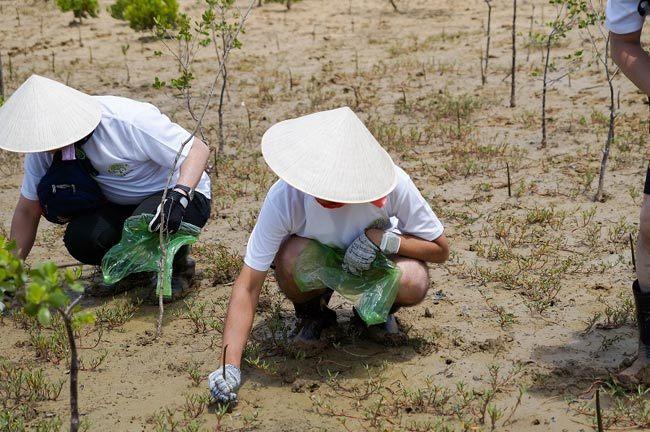 Nhật Bản, tour trồng rừng, Trồng rừng Cần Giờ
