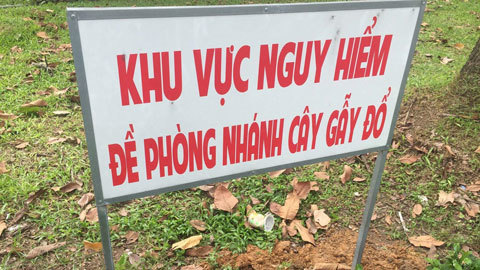 Nữ công nhân ở Sài Gòn bị nhánh cây rơi trúng đầu, nguy kịch