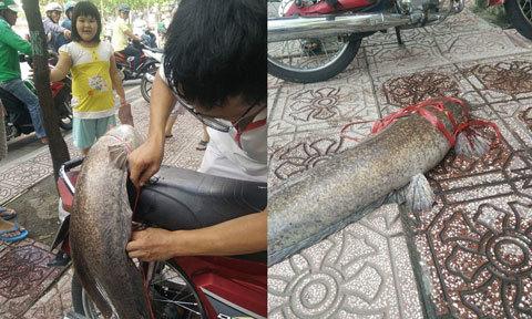 Người Sài Gòn câu được cá trê 'khủng' trên kênh Nhiêu Lộc
