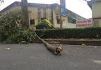 Nữ công nhân bị nhánh cây đè ở Sài Gòn đã tử vong