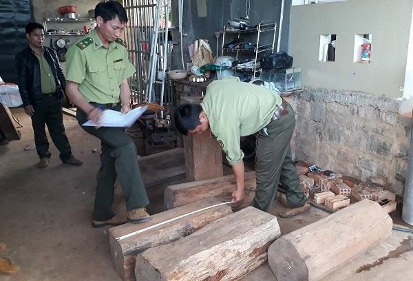 gỗ thông đỏ, kiểm lâm, Lâm Đồng