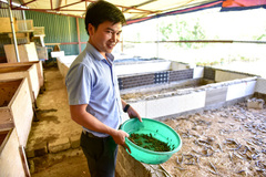 8x kiếm tiền tỷ mỗi năm nhờ nuôi bọ cạp, rắn mối… ở Hà Nội