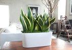 10 siêu cây hút khí độc nên trồng ngay trong nhà