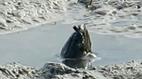 Video sinh vật bí ẩn trên sông Daintree gây sốt
