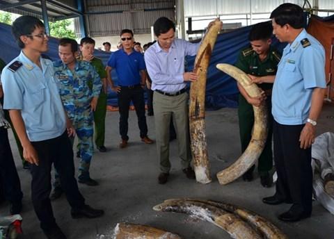Đánh tráo, ăn cắp trên 150kg ngà voi tang vật, một cán bộ hải quan bị bắt