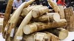Tổng cục Hải quan 'xử' công chức trộm ngà voi tang vật