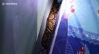 10 clip 'nóng': Phát hiện trăn 'khổng lồ' ẩn dưới gầm giường đứa trẻ