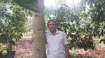 Trồng 'cột chống trời', mỗi cây dổi cho thu 1 cây vàng