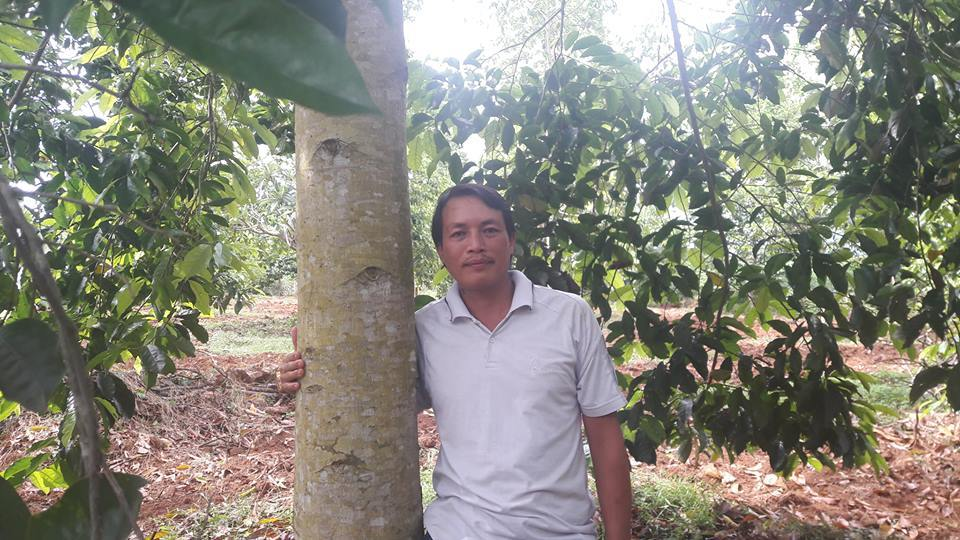 Kết quả hình ảnh cho cây dổi ăn trái