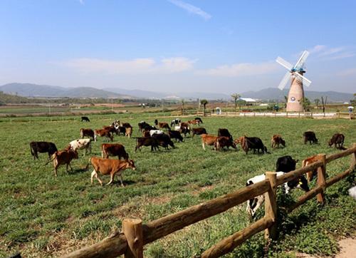Vinamilk - thương hiệu sữa tươi dẫn đầu thị trường VN