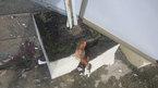 Cổng trường sập đè gãy chân nữ sinh ngày tựu trường