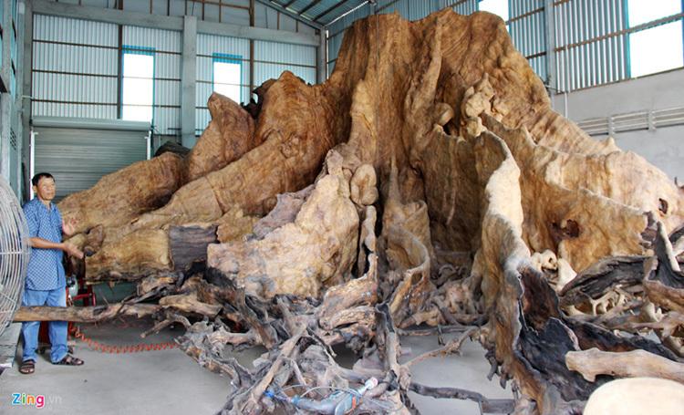 Nhiều linh vật trên gốc cây bàng hàng trăm năm tuổi