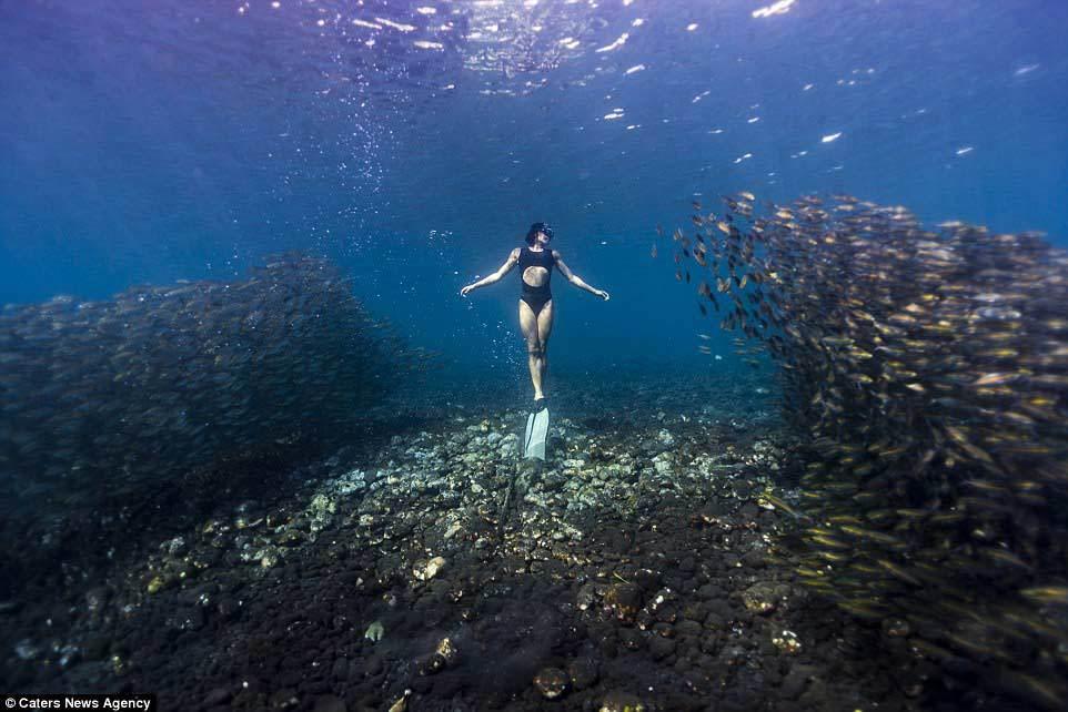 nàng tiên cá, lặn, Australia