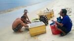 Nhiều học sinh nam nghỉ học đi biển, học sinh nữ đi làm thuê kiếm sống