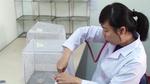 Xem xét thả muỗi nhiễm vi khuẩn diệt muỗi sốt xuất huyết