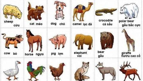 Từ vựng tiếng Anh về các loài động vật