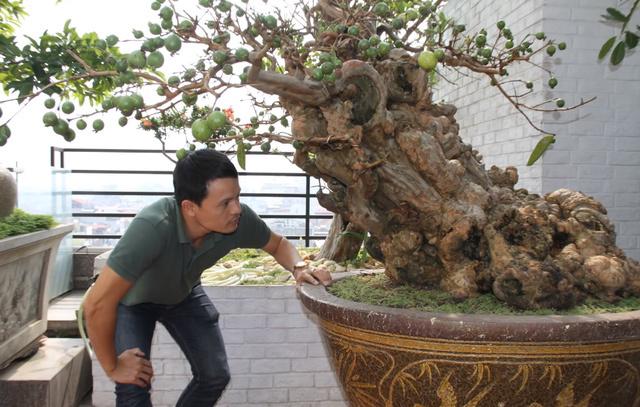 Cây ổi trăm tuổi và cuộc ngã giá tiền tỷ của vị đại gia Hà Nội