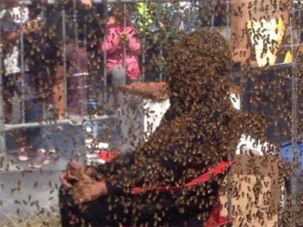 Ong bâu quanh người, kỷ lục thế giới