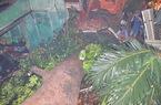 Cây xanh bật gốc đè sập 4 căn nhà ở Sài Gòn