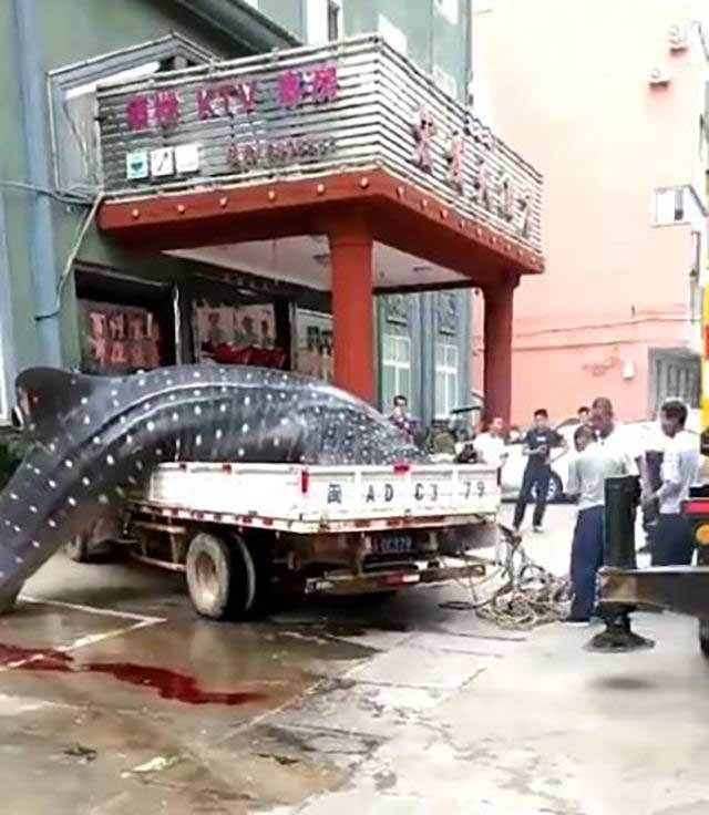 cá khổng lồ, cá mập, cá chết,