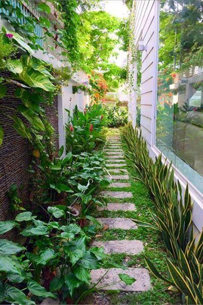 Cận cảnh những vườn rau sạch trong 'biệt thự triệu đô' của sao Việt
