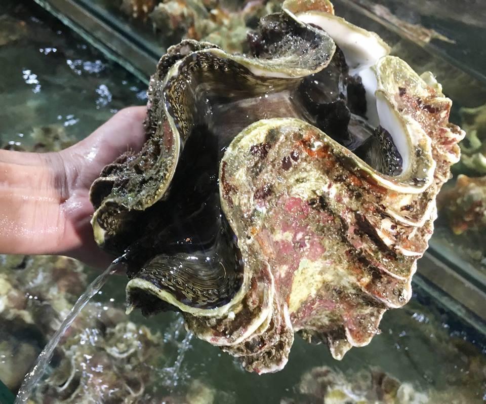 Đại gia Hà thành ăn con ốc 'vô địch' toàn cầu: 10kg, giá 4 triệu