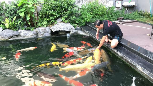 Đàn cá Koi bạc tỷ 'độc' nhất Việt Nam của đại gia Sài Gòn