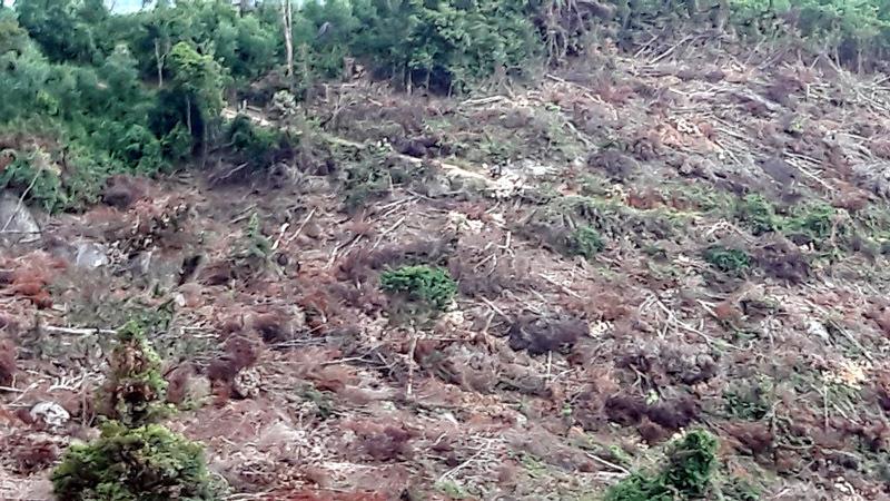 phá rừng, lâm tặc, Bình Định, rừng tự nhiên