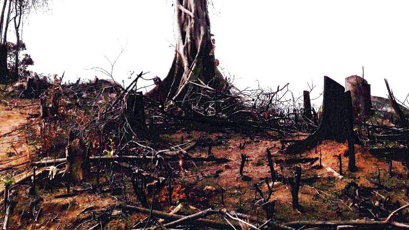 Chủ tịch huyện ngã ngửa khi hàng loạt ha rừng bị cưa trụi