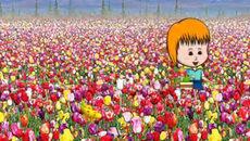 Sự tích hoa tuylip