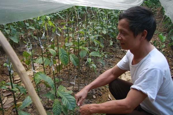 Làm giàu ở nông thôn: Một cây dổi đổi cả...chỉ vàng