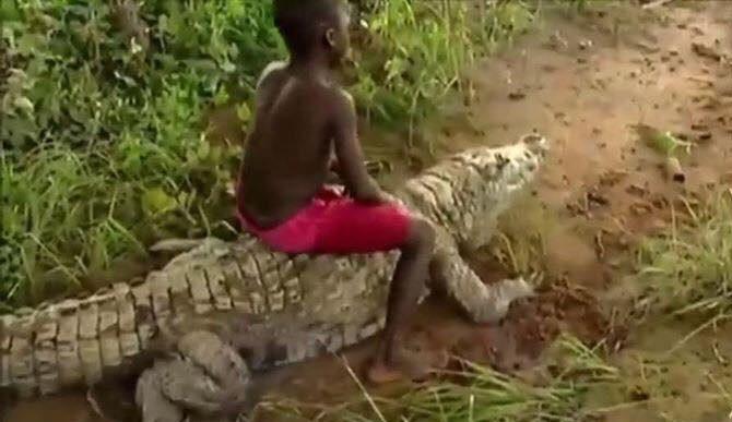 Bạn có đủ bản lĩnh cưỡi cá sấu