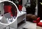 Cửa hàng điện thoại náo loạn vì bị lợn rừng tấn công