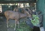 Đà Nẵng tính xóa sổ vườn thú 30 năm chỉ có 1 con trăn