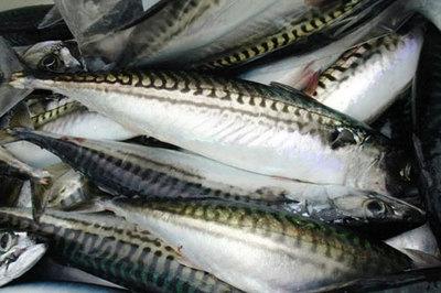 Mẹo chọn cá nục biển tươi ngon