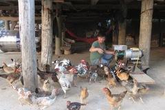 Gà, lợn giun quế: Hàng hiếm một thời tràn ra thị trường với giá rẻ