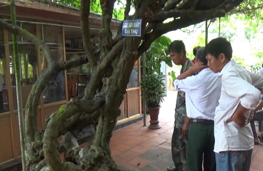 Cây hoa giấy Trung Quốc trả 2 tỷ: Lời thật dân chơi Việt