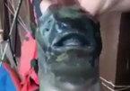 Bắt được 'quái vật biển' đột biến hai miệng